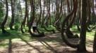 Nowe Czarnowo Krzywy Las